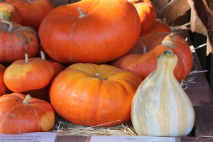 Jack Creek Pumpkins copy