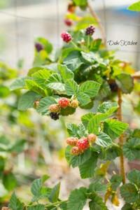 Christina-blackberries-watermarked
