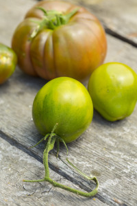 Heirloom Tomatoes-5529
